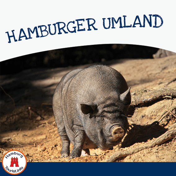 HAMBURGER UMLAND