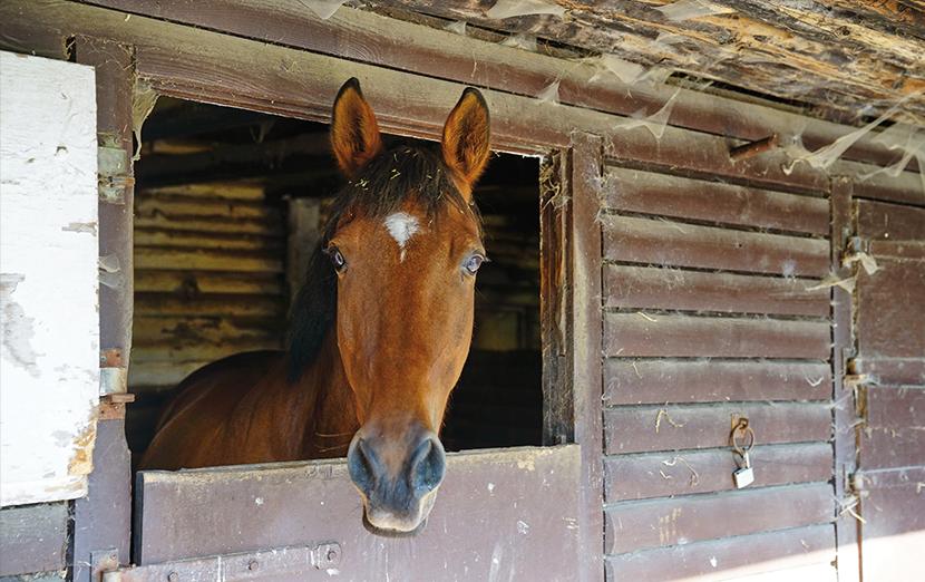 pony-reiten-niendorf