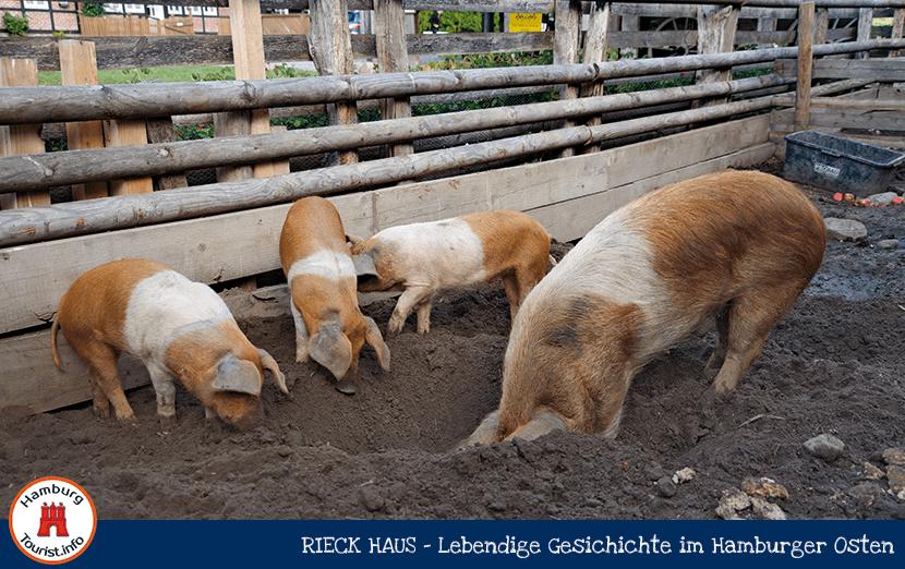 rieckhaus_2